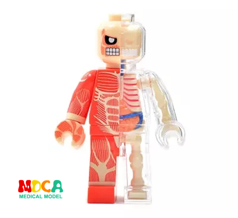 где купить Fashion brick man 4d master puzzle Assembling toy Perspective bone anatomy model дешево