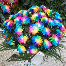 200pcs/bag rainbow daisy floreschrysanthemum plantasbonsai flower plants,beautiful potted plants for home garden