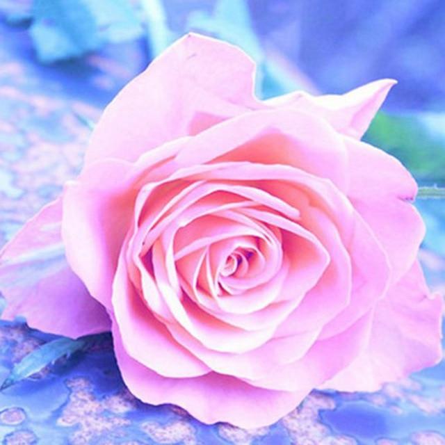 Full-5D-Diy-Daimond-Painting-Cross-stitch-Rose-3D-Diamond-Mosaic-Full-Square-Round-Rhinestones-Paintings.jpg_640x640
