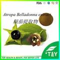 100% pure natural extrato de beladona, Escopolamina Atropa belladonna Extrato em pó 10:1 700 g/lote