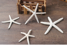 2pcs /lot white natural finger starfish seashells tank to decorate To stick children toys natural crafts sea star 5-10cm
