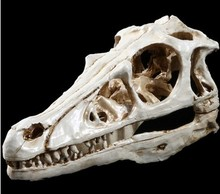 Dinosaur  animal skull resin collection personalized ornaments bar desk home decoration resin craft 80x65x170mm