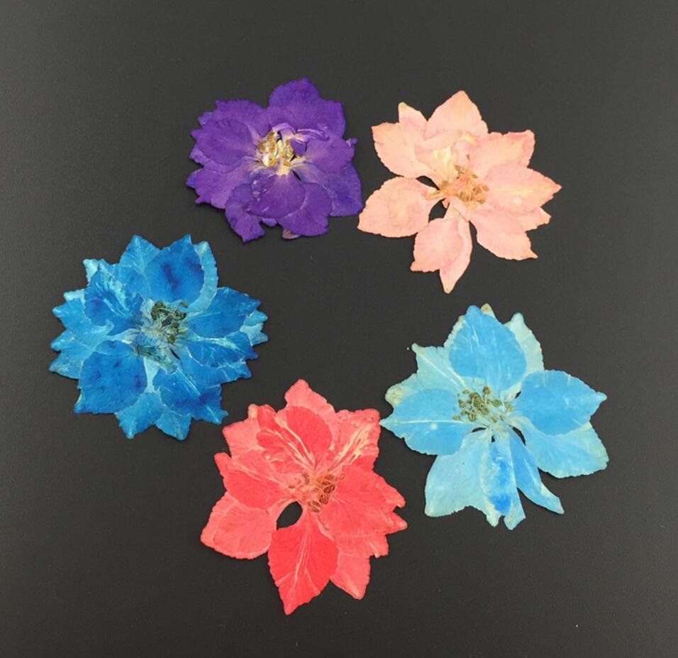 120pcs Mini Pressed Dried Gaura Lindheimeri Flower For