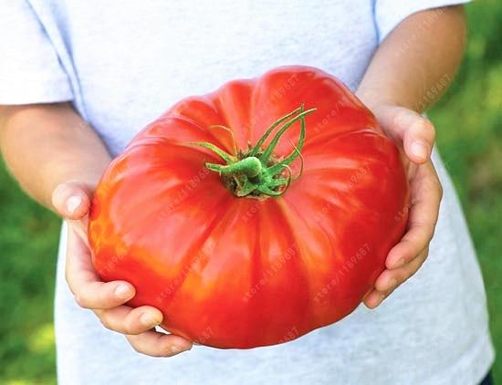 Свежая реликвия гигантский Монстр помидор очень Редкие овощи для дома горшок для садового растения легко вырасти 200 шт./Сумка
