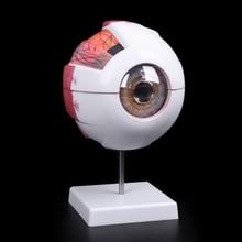 Modelo de globo ocular anatómico, Ayuda de aprendizaje médico, instrumento de enseñanza de ciencias médicas, recursos para enseñanza, envío gratis
