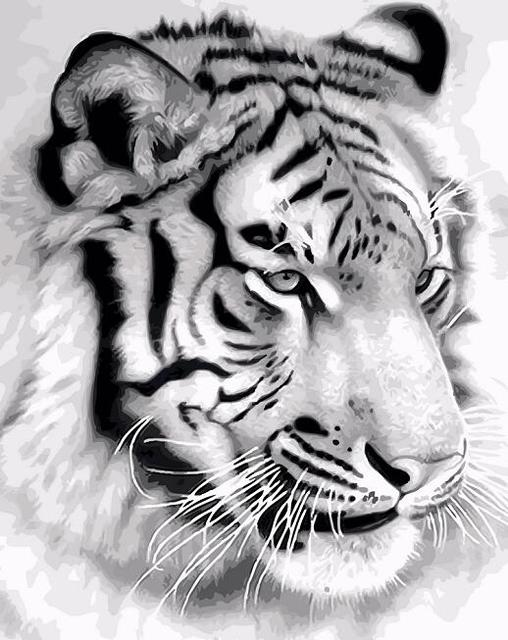 Black White Tiger Coloring By Numbers Canvas Acrylic Paints For