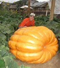 20pcs/ Giant pumpkin bonsai, vegetable plant large U.S. super giant pumpkin flores for home and garden