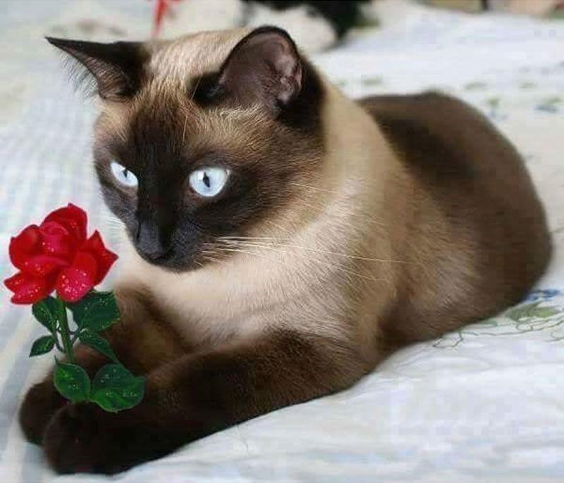 Симпатичні кішки дриль смола стрічка - Мистецтво, ремесла та шиття - фото 4