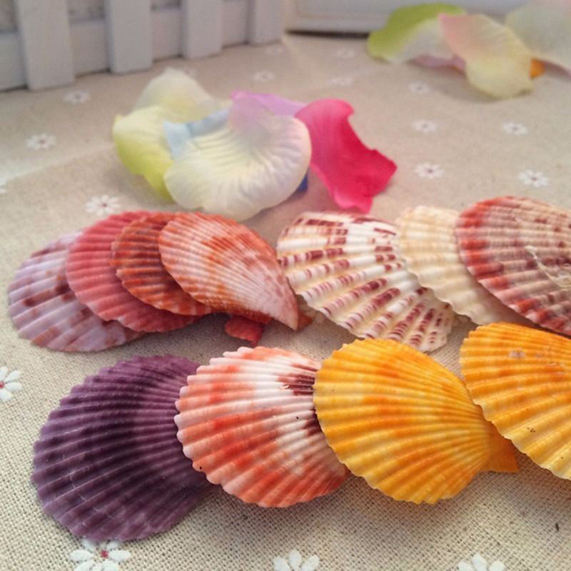 20x Colorful Natural Seashells Decorations Scallop Shells Crafts Decor Ornament