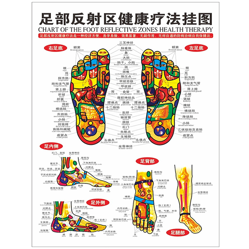1pc standard reflexology charts of tcm foot acupoint