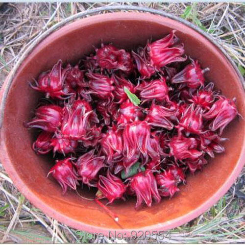 Hot selling 100 SEEDS ROSELLE (HIBISCUS SABDARIFFA) * CHINESE HERBS SEEDS * EXCELLENT AS TEA DIY home garden free shipping
