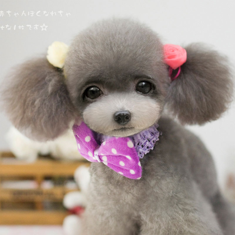 Beautiful Collar Bow Adorable Dog - Abby-caps-cute-dog-dog-pet-dog-collar-scarf-bow-hat-3-colors-double-collar-with  HD_216745  .jpg