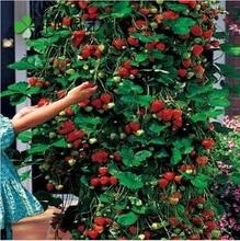 ( Минимальный заказ $ 5 ) 50 шт./упак. дерево восхождение клубника семена двор сад с фруктами и овощных культур в горшках