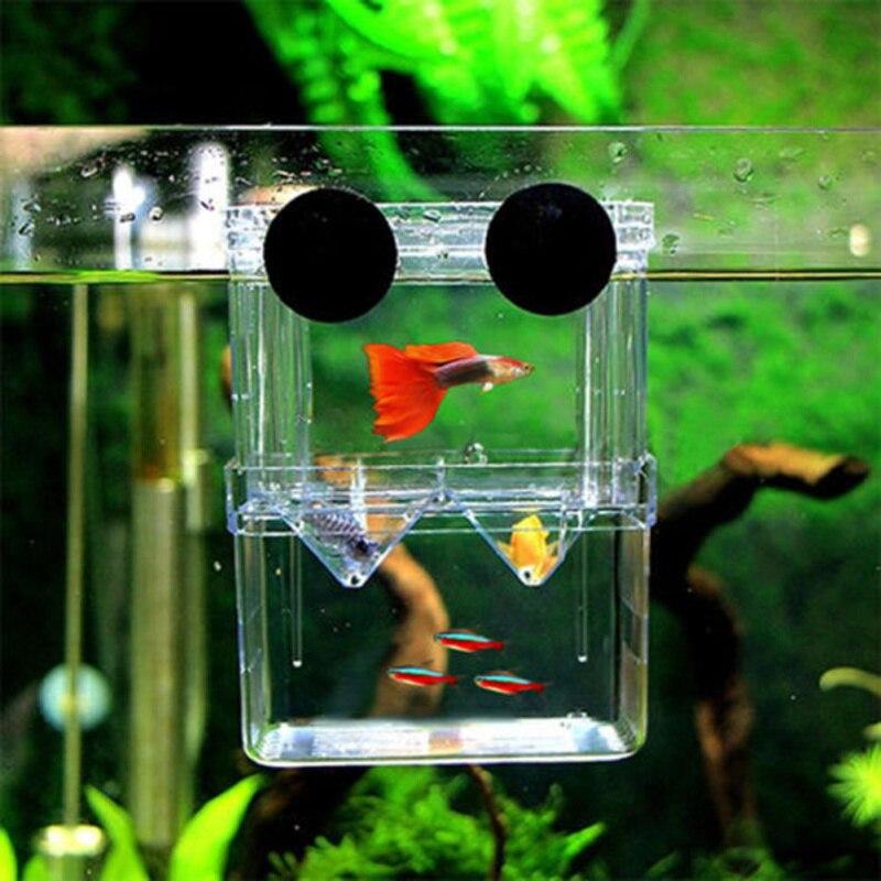 Buy aquarium fish breeding box acrylic for 1 fish 2 fish store