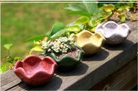 2016 Several Pcs Ceramic Pots Small Mini Fleshy Cheap Calving Gifts Personalized Desktops Simple Pots Succulents