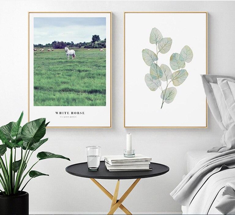 Weißen Pferd Tiere Grünland Grün Wasser Farbe Pflanzen Bilder Wand ...
