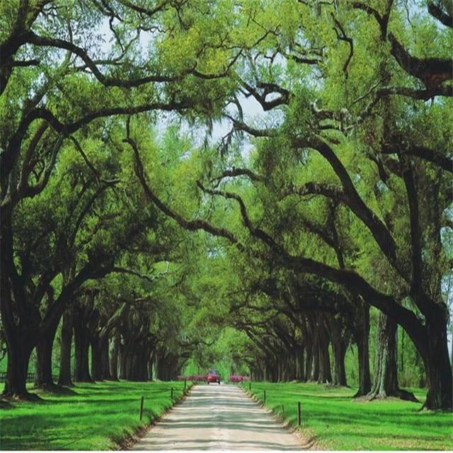 Download 4000+ Wallpaper Cantik Pohon HD Gratis