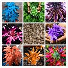 100 pcs/bag Japanese Rainbow Hemp Seeds Rare Flower Seeds Bonsai Hemp Plants seeds vegetables herb For Home Garden pot