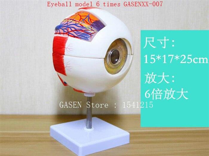 Eyes Teaching equipment medicine ophthalmology Medical Anatomy Eyeball model 6 times GASENXX-007 co 007 6