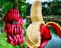 100pcs rare banana seeds fruit banana red skin fruit seeds  for home garden plant using for ornamental-plant