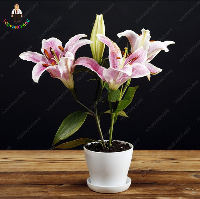 100 Pcs/bag Pink Lily Plants Flower Indoor Potted Bonsai Flores Home Garden Diy Gift Free Shipping