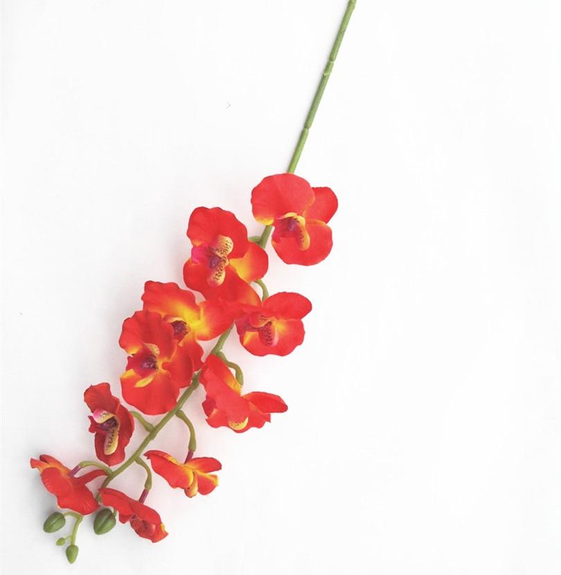 Orhideja Phalaenopsis 10 krema za glavo / oranžna / vroče roza / - Prazniki in zabave - Fotografija 6