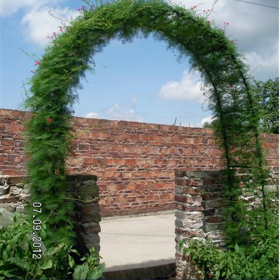 Envío gratis, 140 * 38 * 240 cm de la alta, Simple arco de flores de jardinería calabaza vides marco principal de carreteras de vid de ratán hierro. boda decorativo