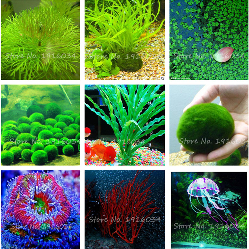 Buy 100 pcs bag aquarium plants seeds grass water aquatic plant seeds indoor - Indoor water plants list ...