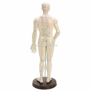 """Image 2 - """"Menselijk Lichaam Acupunctuur Model Mannelijke Meridianen Model Grafiek Boek Base 50Cm"""