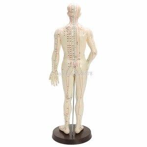 """Image 2 - """"Model akupunktury ludzkiego ciała Model meridianów męskich podstawa książki 50cm"""