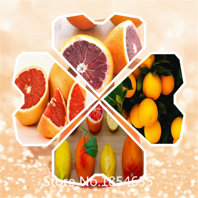 Winsome Online Get Cheap Orange Tree Garden Aliexpresscom  Alibaba Group With Exquisite Garden Plant Potted Edible Fruit Seeds Mini Bonsai Orange Seeds China  Climbing Orange Tree Seeds  With Appealing Garden Arch With Gate Also Victorian Garden Edging Tiles In Addition Places To Eat Lunch In Covent Garden And Garden Slang As Well As Garden Slabs Gumtree Additionally Spice Garden London From Aliexpresscom With   Exquisite Online Get Cheap Orange Tree Garden Aliexpresscom  Alibaba Group With Appealing Garden Plant Potted Edible Fruit Seeds Mini Bonsai Orange Seeds China  Climbing Orange Tree Seeds  And Winsome Garden Arch With Gate Also Victorian Garden Edging Tiles In Addition Places To Eat Lunch In Covent Garden From Aliexpresscom