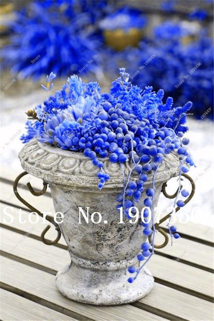 Hot Sale! 200 Pcs Blue Pearl Chlorophytum Office Desktop Flowers Succulents Anti-Radiation Computer Potted Plants Purify Air