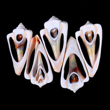 5 uds. 4-6cm pequeño corte a granel Playa Mar Concha Natural Conch Beads Cowry Cowrie Tribal Jewelry Craft Accessories DIY(China)