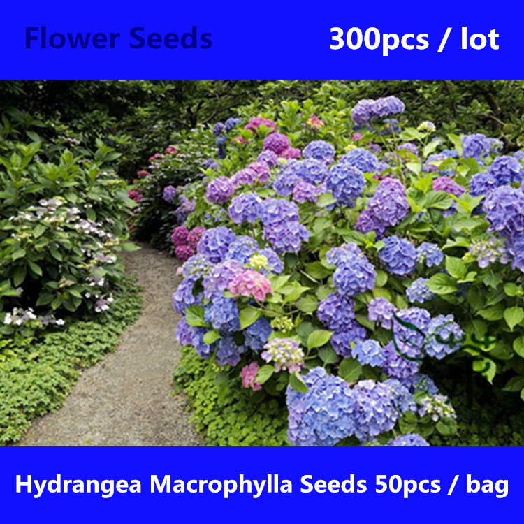 Comparar precios en hortensia flower online shopping - Semillas de hortensias ...