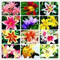 Tempo-Limite!! 100 Sementes de Um Monte de semente de flor de Lírio plantas bonsai sementes de flores fáceis de crescer