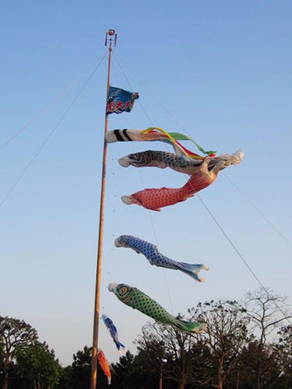70cm japanische Windsack Karpfen Flagge Nobori Segelfisch Fisch Wind