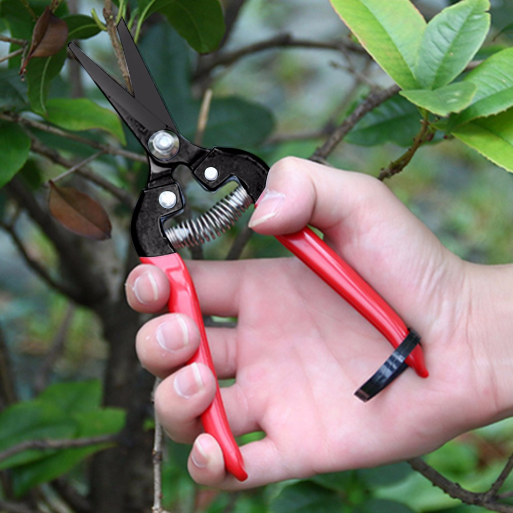 Fruit tree pruning shears bonsai pruners garden shears for Gardening tools pruning