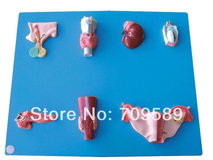 Advanced Anatomical Endocrine Organ model 1ch 1080p full hd tvi ahd cctv home office mini dvr sd card video recorder