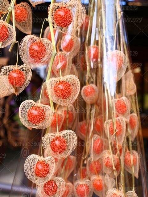 100 шт. Physalis peruviana бонсай растения мыс крыжовник фрукты вкусные фрукты и овощи растения для дома сад комнатные растения