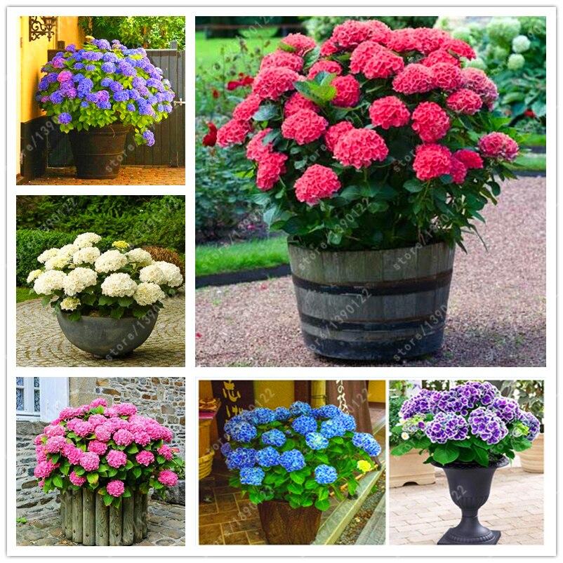 Fiori perenni da vaso piante da fiore with fiori perenni for Fiori da vaso perenni