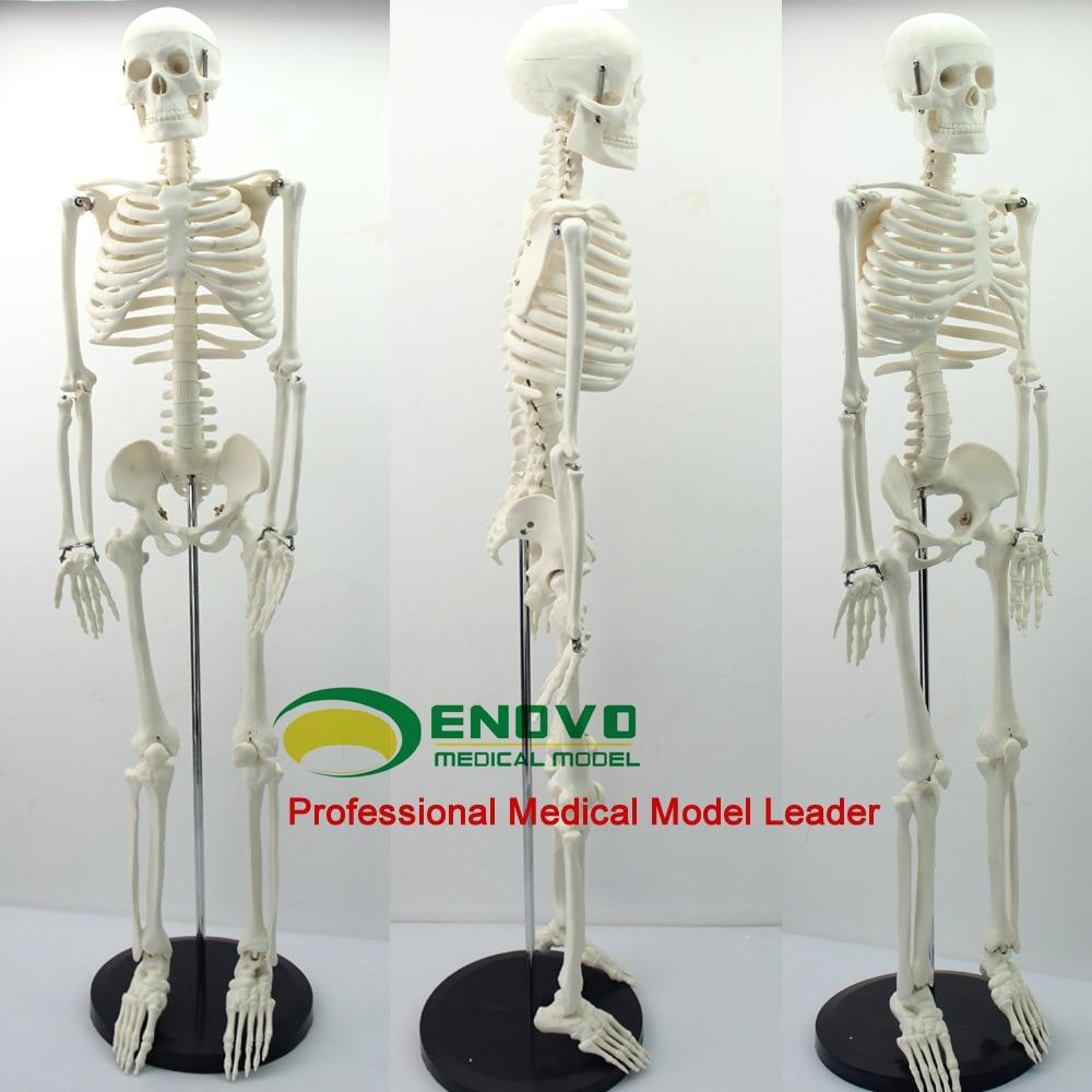 Estándar Medical anatomía 85 cm Cuerpo Humano esqueleto modelo maniquí hi-q médica esqueleto
