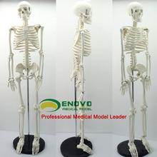 Стандарт медицинской Анатомия 85 см Человеческое тело Скелет модельный манекен Здравствуйте-Q медицинские esqueleto