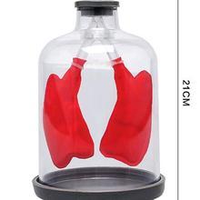 Модель дыхания легких легочная модель органов дыхания респираторная система человека модель Септум мышца имитирует движение