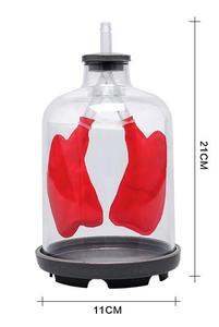 Image 1 - Lung Respiration Model Pulmonary respiratory model Human respiratory system model septum muscle simulates movement