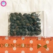 30 pcs/lot rare colorful Jasmine seeds tree bonsai seed garden&home organic herb plant