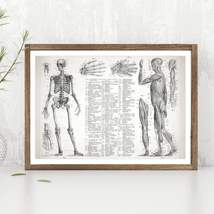 Human Anatomy Poster Canvas Painting Wall Picture , Muscular And Skeletal Systems Poster Canvas Prints Medical Wall Art Decor(China)