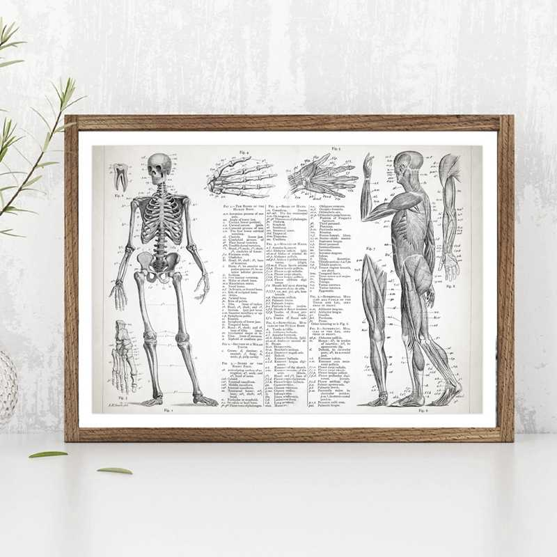Human Anatomy Poster Canvas Painting Wall Picture , Muscular And Skeletal Systems Poster Canvas Prints Medical Wall Art Decor