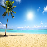Tropical Beach Themed Photo Backdrop Palm Tree Sandy Seaside Scenery Summer Holiday Wedding Photography Backgrounds for Studio