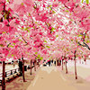 Digital Oil Painting By Numbers Romantic Landscape Artistic Pink Big Trees Empty Street Canvas Picture Decor