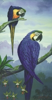 Moderne muur decor art mooie vogels olieverf canvas foto van papegaaien de kwaliteit handgeschilderd olieverfschilderij